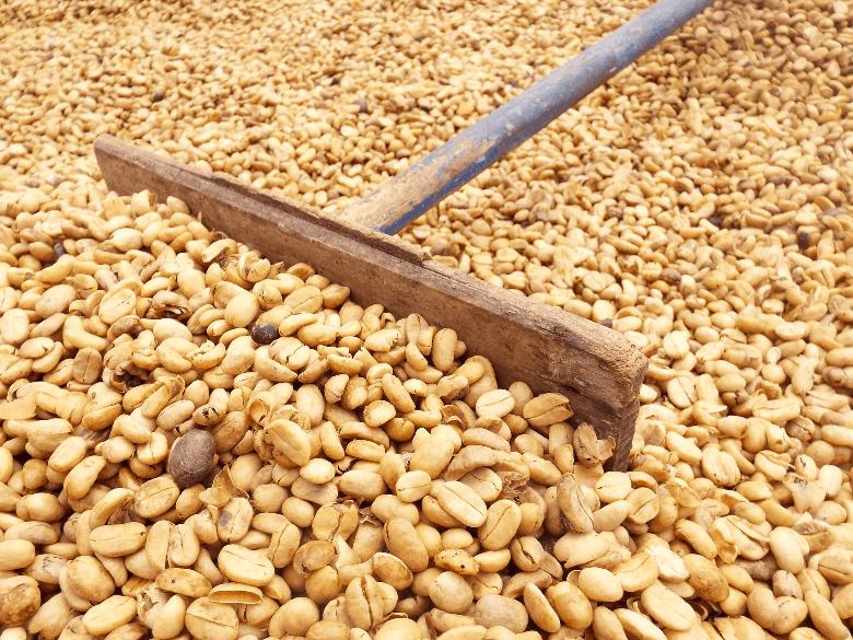 Growing organic coffee