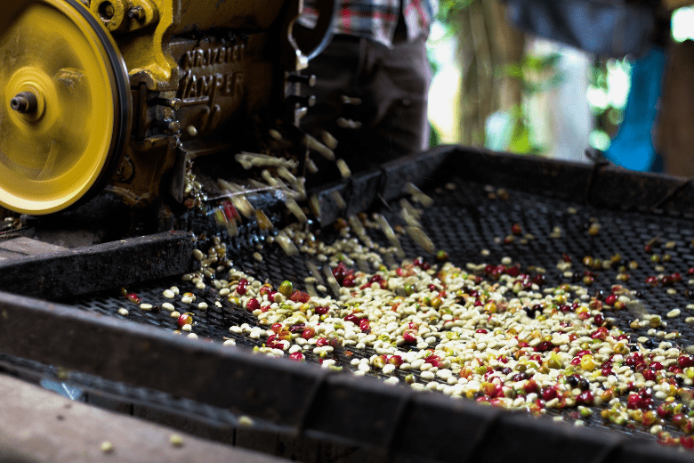 Wet Processed Colombian Coffee